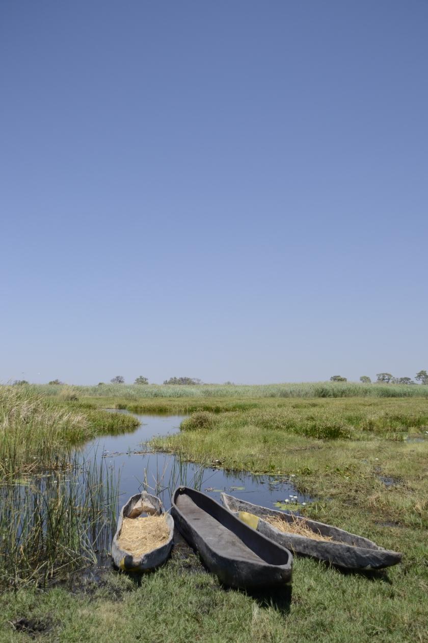 Mokoro's in Okavango Delta