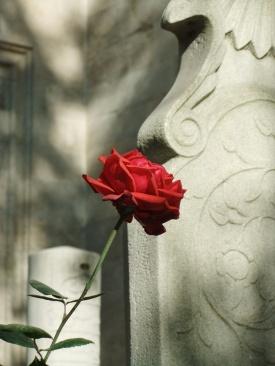 Roos op begraafplaats Eyup