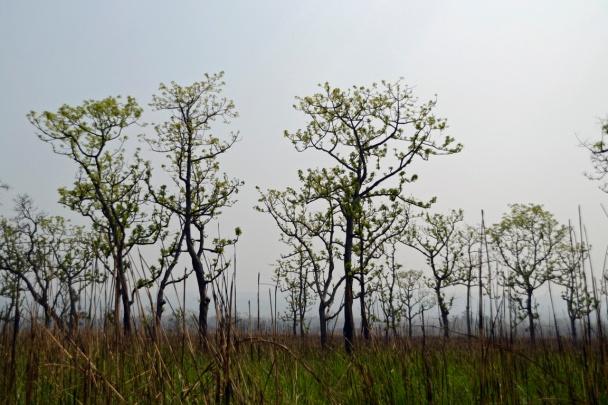 Chitwan vlakten