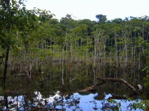 Blanche marie trip Suriname blog