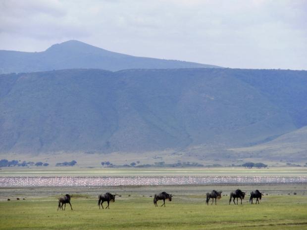 Ngorongoro krater reisblog