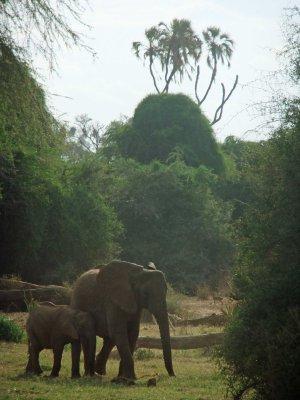 Samburu park Kenya olifanten blog