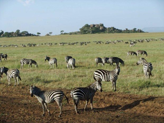 Serengeti travel blog tip Africa