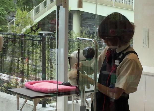 Pup fluffer Japan blog