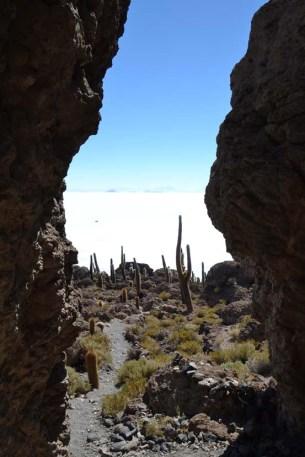 eiland kaktussen Salar Uyuni Bolivia