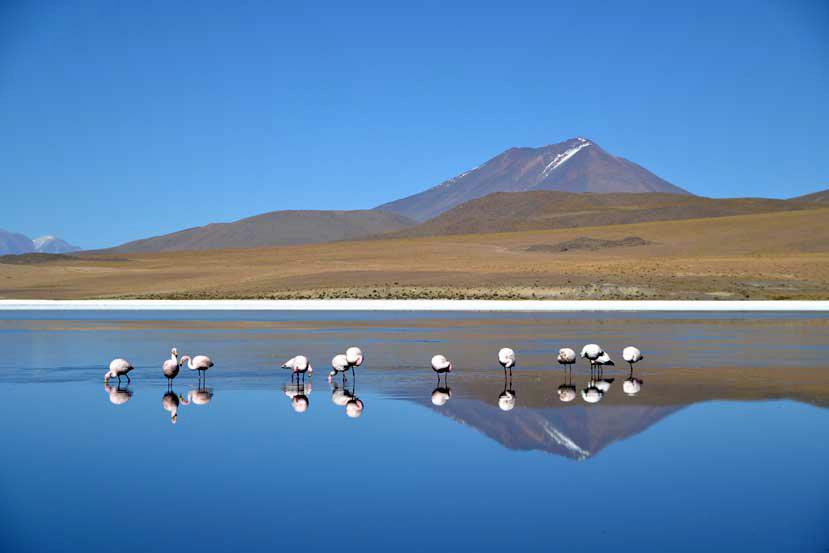 meren bolivi met flamingo