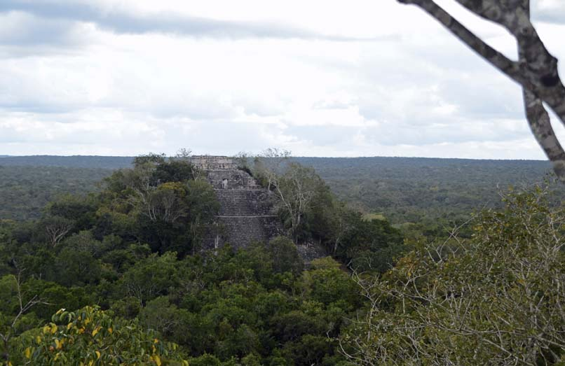 Uitzicht over de jungle vanaf Ruine Calakmul Mexico