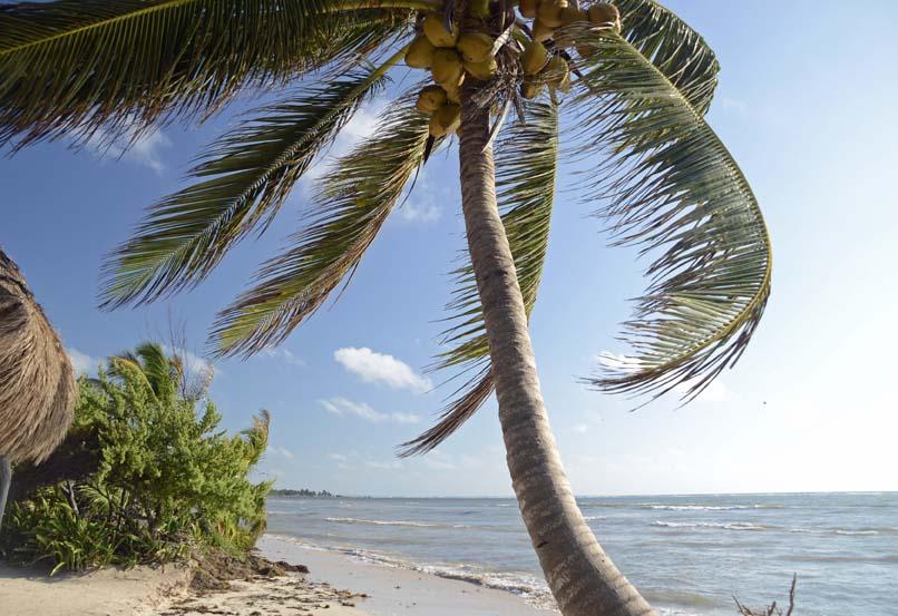 Mexico strand Mahahual met palmboom