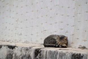 Slapende kat MExico
