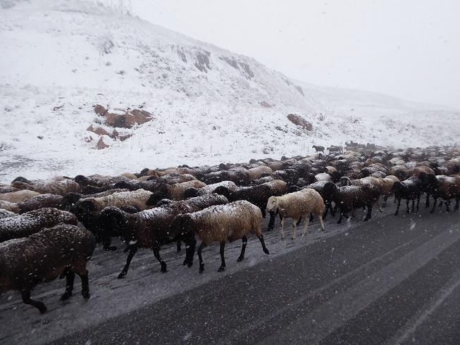 berpas-naar-bishkek-kirgizie