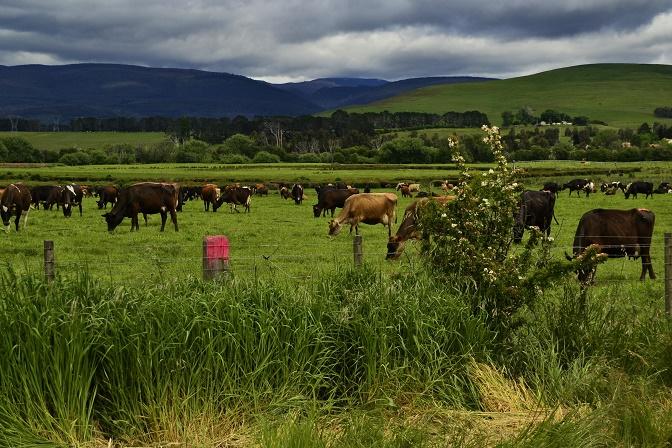 groene-velden-en-donkere-wolken-tasmanie