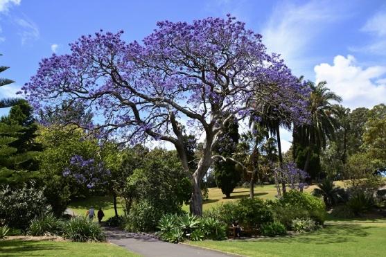 royal-botanical-garden-sydney-australie